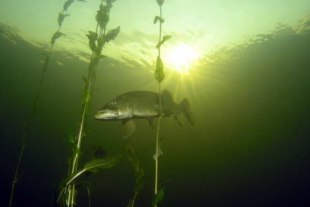 Open Water Diver - Regulier