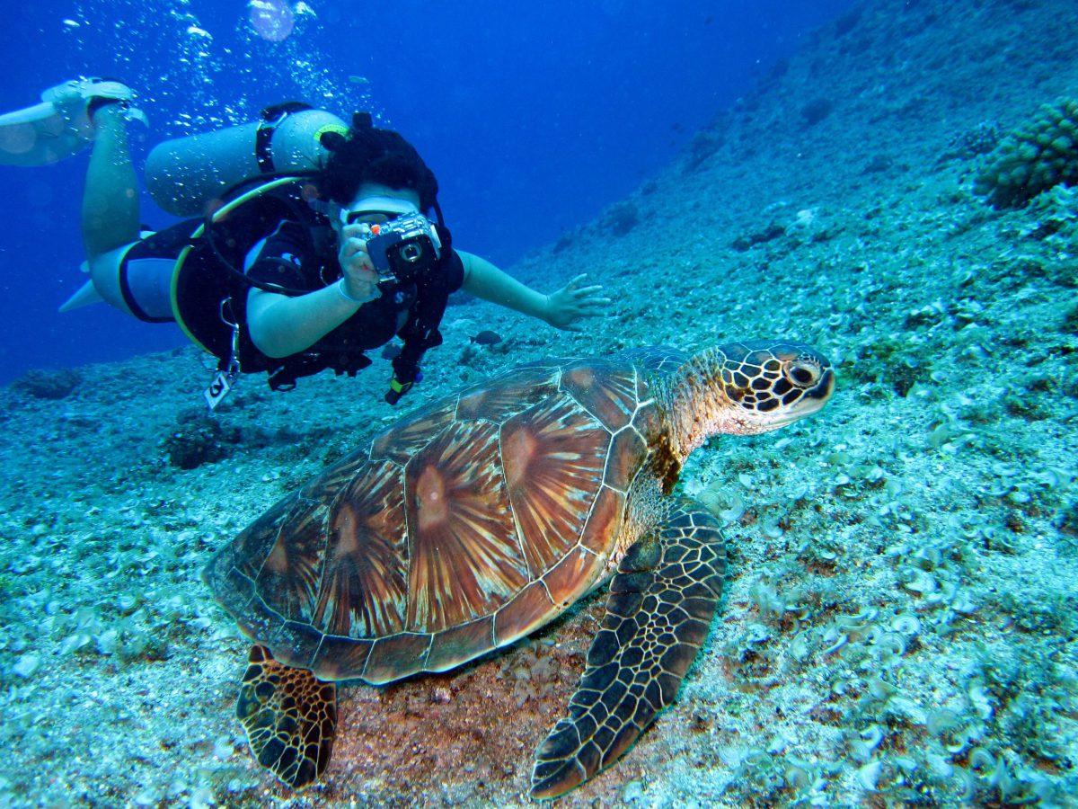 Open Water Diver - Vakantie