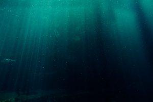 Diep duiker