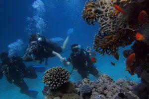 Discover Scuba Diving Leader